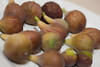20120803 Freshly picked figs from our garden (1921)