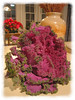 About to cook with ornamental kale [edgefade10 frame]