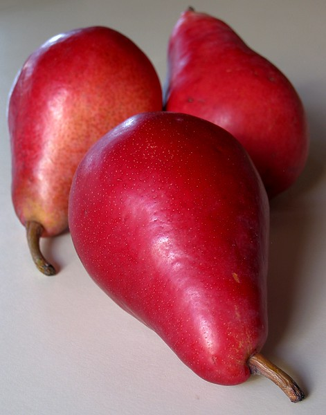 Red Comice Pear cl (portrait) - somewhat rare and delicious red sport of 'Doyenne du Comice'