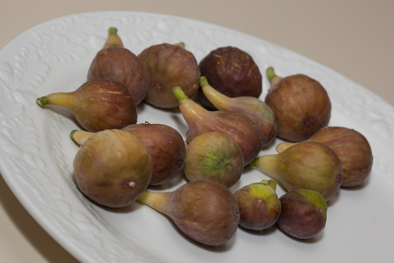 00aFavorite 20120803 Freshly picked figs from our garden (1920)