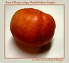 Organic rouge d'etampes antique French heirloom pumpkin (aka Cinderella pumpkin) [borders, text]