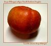 Organic rouge d'etampes antique French heirloom pumpkin (aka Cinderella pumpkin) [borders, text]