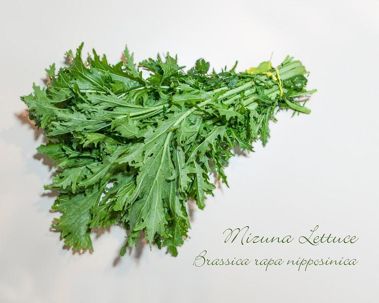 00aFavorite Mizuna Lettuce [text]
