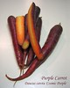 00aFavorite Purple Carrot (uncompressed ready to print 8x10) [border, text]