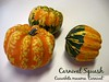 Carnival winter squash [text]