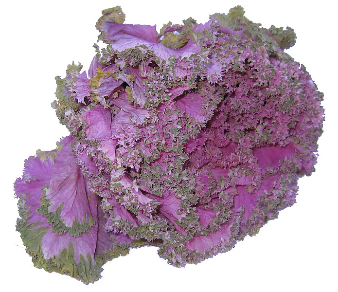 Ornamental kale [bg removed]