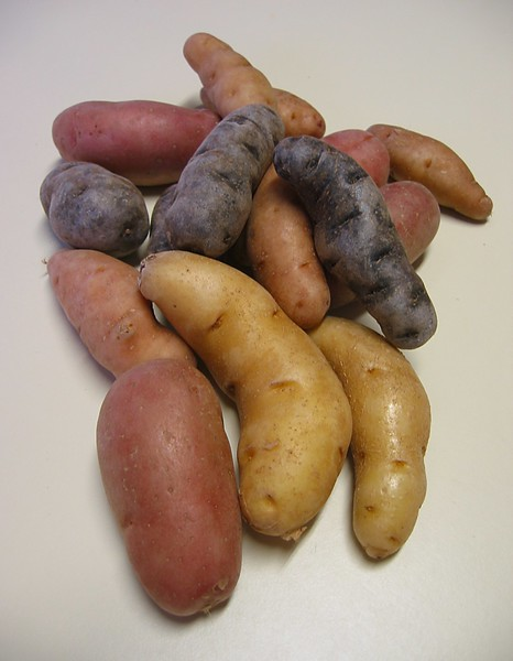 Potatoes - blue, red, fingerling (portrait)