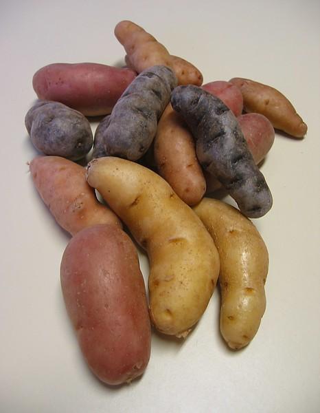 Potatoes - blue, red, fingerling (portrait)