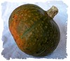 Kabocha Squash [washed out frame]