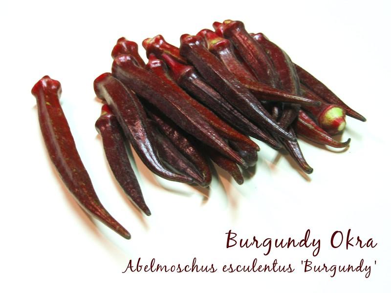 Burgundy okra 3 - many spears [text]