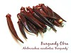 Burgundy okra 3 - many spears [text]
