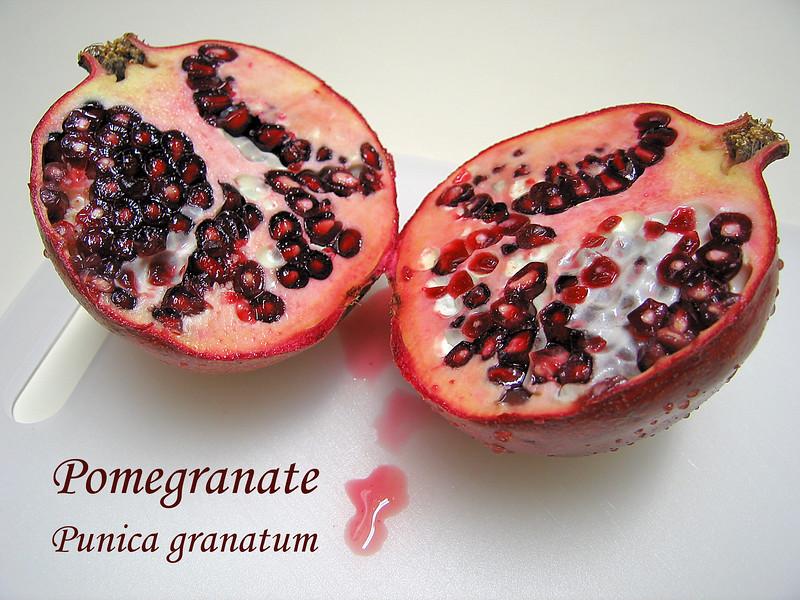 Pomegranate split open [text]
