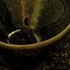 """Sung Dynasty """"Rabbit Fur"""" Glazed Bowl with Indian Shawl."""