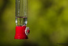 Hummingbird feeder. Side view of hummingbird feeder isolated on blurred natural background.
