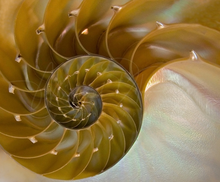 Geometry of Nature -  Nautilus Shell