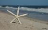 Starfish 5169 w68