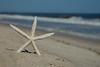 Sea Star 5167 w68