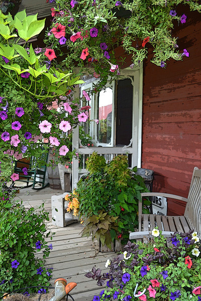 Petunia Porch - Taken at Fairhaven Farm in South Haven, MN
