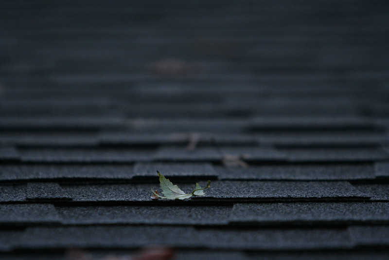 Leaf on shingles