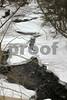 Snowy Stream copyrt 2014 m burgess