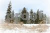 Winter Dreamscape copyrt 2014 m burgess