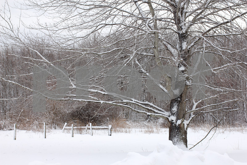 Snowy Tree Copyrt 2014 m burgess