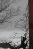 Branches in Winter Copyrt 2014 m burgess