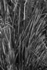 Cropped grasses, A Street