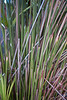 Grasses, A Street