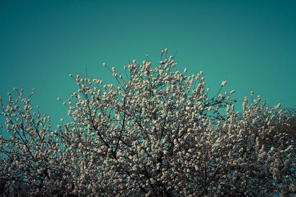 Popcorn On A Tree