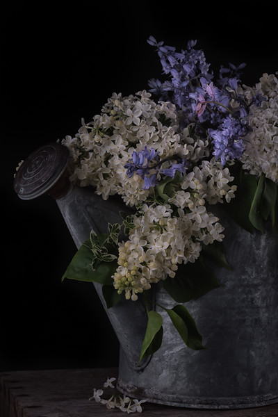 White lilacs and wild hyacinth.