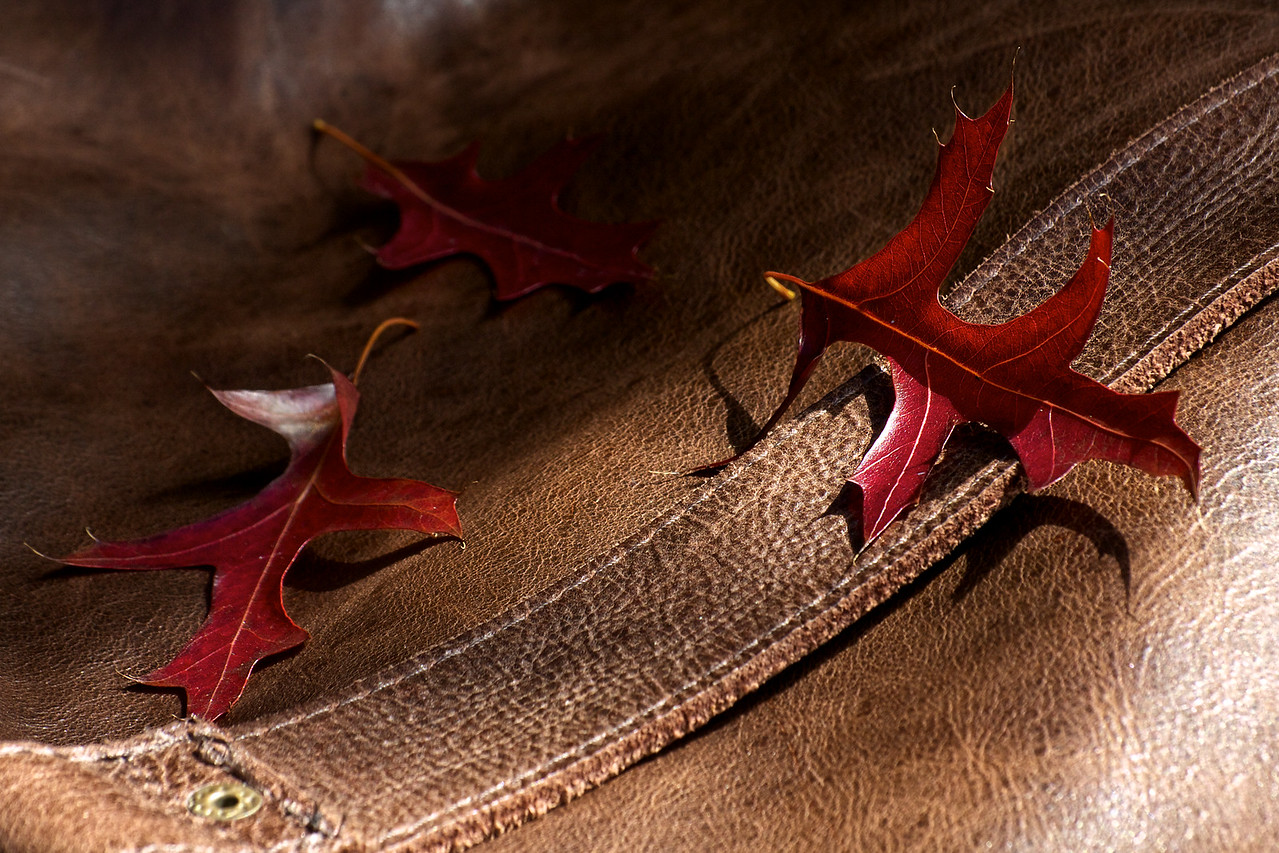 Of Leaf and Leather
