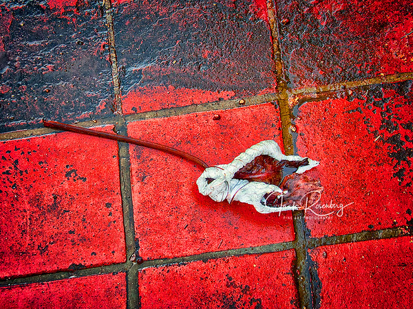 """Dried Flower On Red Tile"""