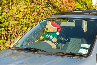 Teddy Bear at the Wheel