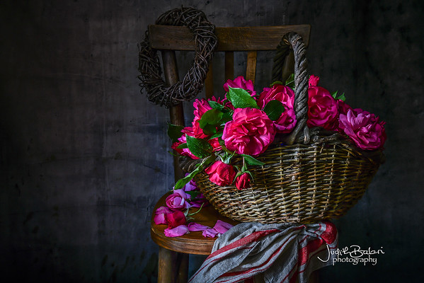 Dario's roses