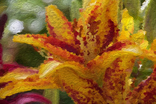 Vincent's Lily