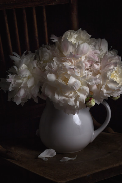Pitcher of Peonies.