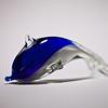 20110211_SL_Dolphin-9360