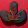 Maple Leaf On River Stones