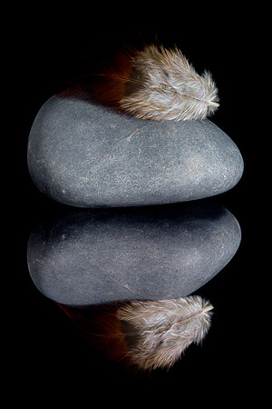 Feather Lying Heavy on Stone