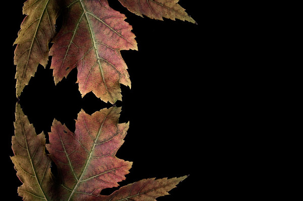 Maple Leaf, Negative Space