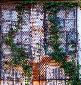 Fenced Doors
