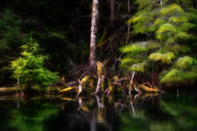 Woodland pond, Hoh Valley, Olympic National Park