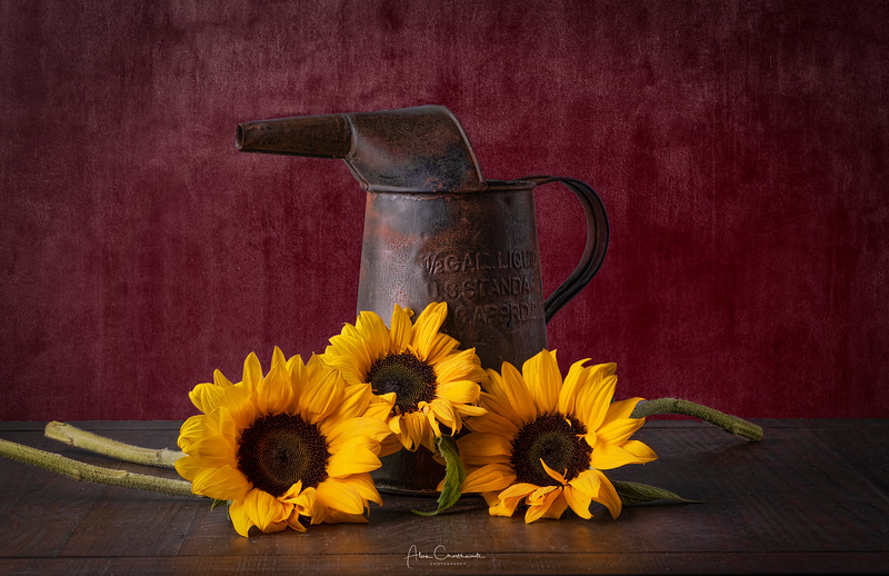 Old water can and three sunflowers