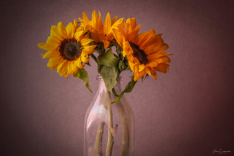 Sunflowers in an old bottle