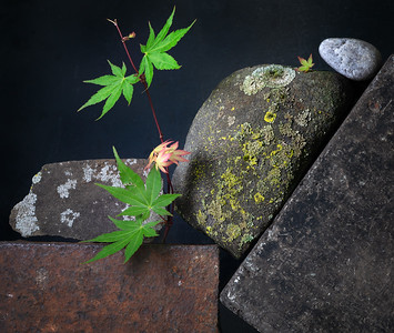 Tilted Still Life with Steel, Stone, Lichen and Japanese Maple