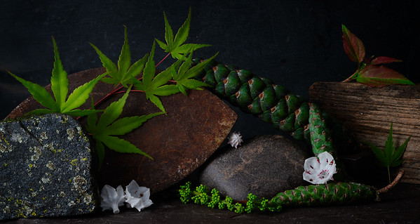 Still Life with Mountain Laurel and Pine Cones