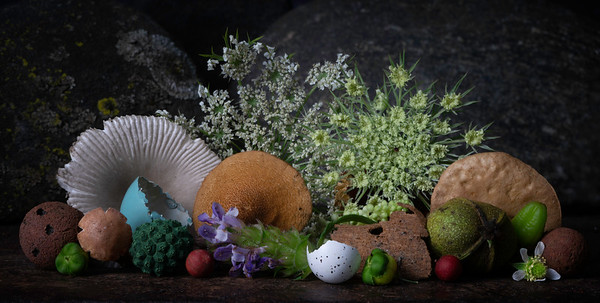 Still Life with Mushrooms & Queen Anne's lace