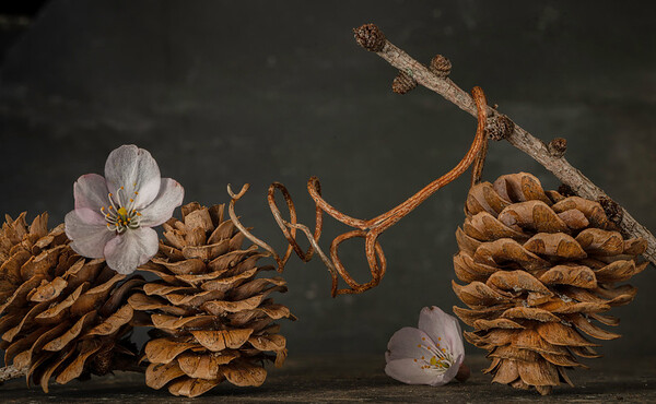 Three Pine Cones, Two Blossoms & One Vine