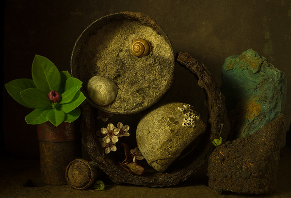 Still Life with Sand, Snail & Stone (Spring 18  #125)